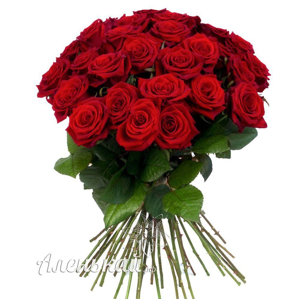 Купить розы флорибунда в пятигорске цветы домашние каталог фото купить